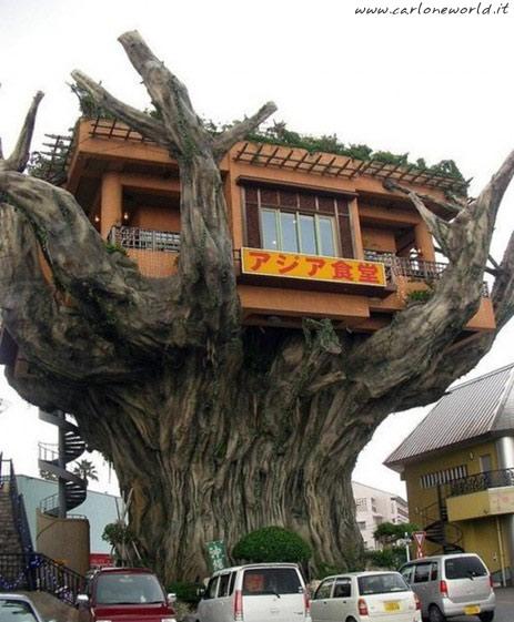 foto dal mondo casa su albero