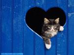 Cartolina d'amore