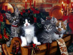 Cartolina regalo di Natale