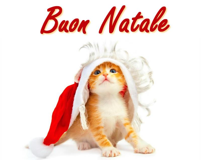 Gattino buon Natale