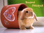 Cartolina Auguri Pasqua