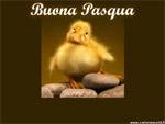 Cartoline Pasqua