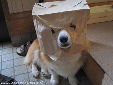 Cagnolino in maschera